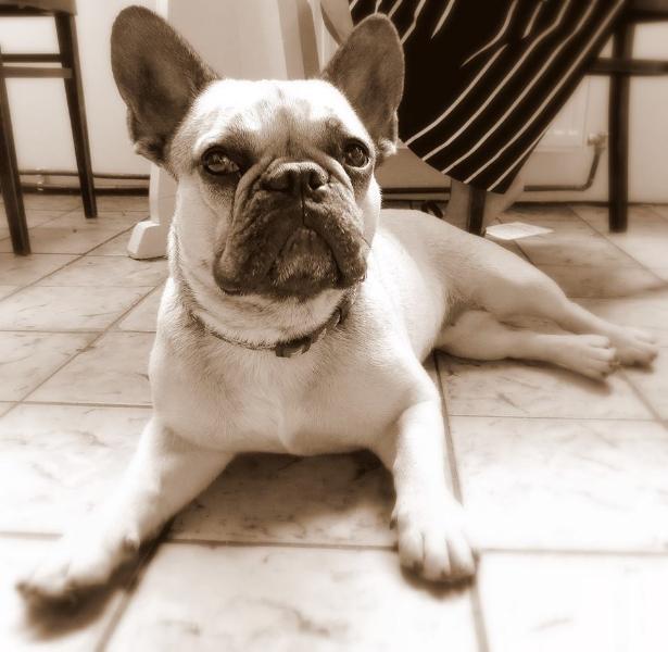 Haus- und Hofhund Lola